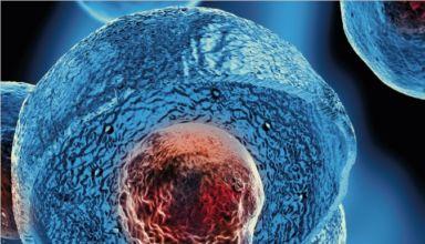 Plakat Stammzellentypisierung