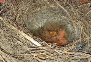 Vogelrettung 2