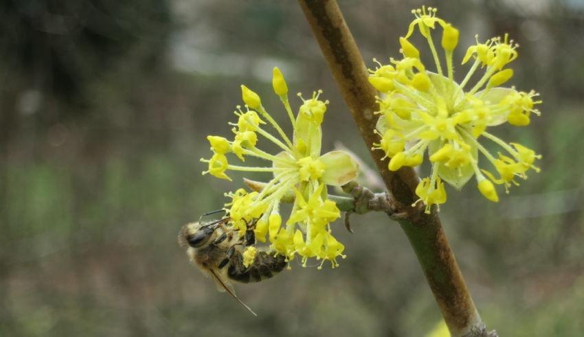 Heckentag 2021 Biene Auf Blüte